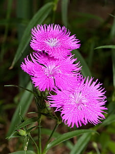 focus photography of pink petaled flowers