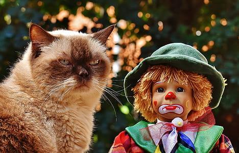 short-coated brown cat beside sad clown doll