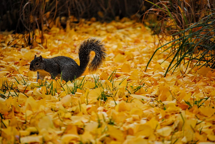 gray squirrel in shallow focus photography