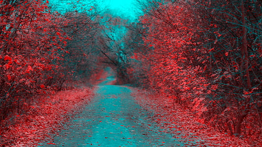 road between red trees during daytime