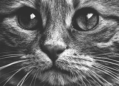 macro photograpy of gray cat