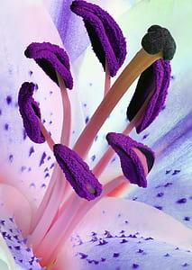 Purple Pollen Flowers