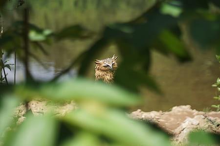 brown owl at daytime
