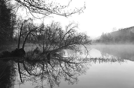 grayscale photo of pond