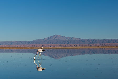 white flamingo standing on body of water