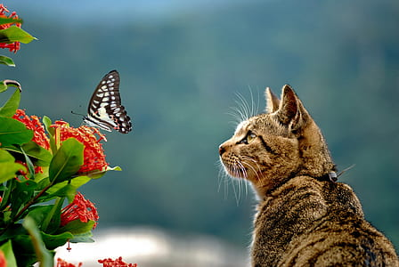 brown cat looking on black and white butterfly