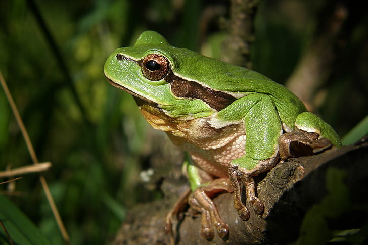 selective focus photography of green and brown frog perched on tree branch