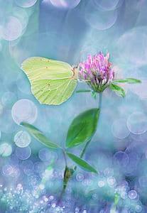 green butterfly on pink flower