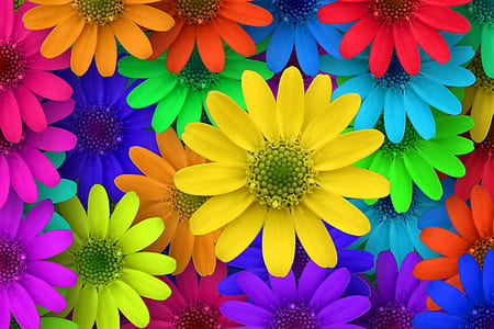 red, blue, green, yellow, and orange flowers illustration