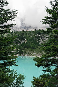 bodies of water surrounded by pine trees