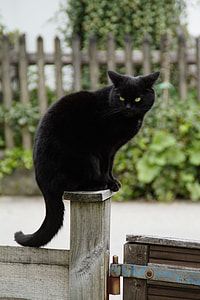 bombay cat on brown wooden post during daytime