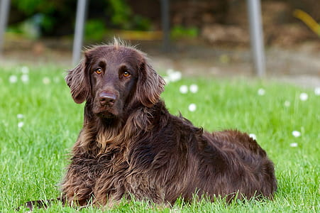 brown dog lying on green grass during daytime