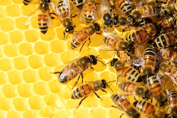 colonies of bees