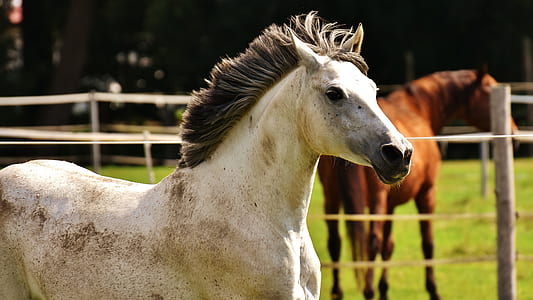 white and beige horse