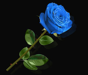 blue petaled rose flower