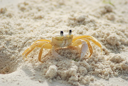 photo of yellow and white crab
