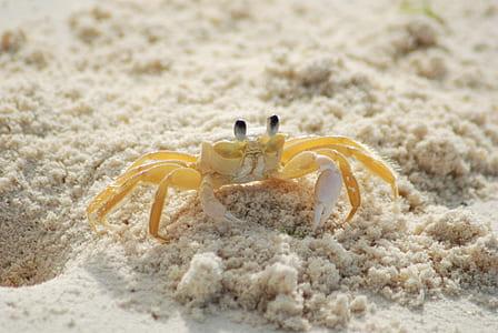 photo of yellow and white crab