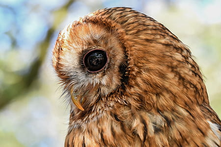 closeup photography of brown owl