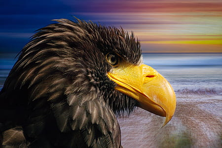 closeup photography eagle