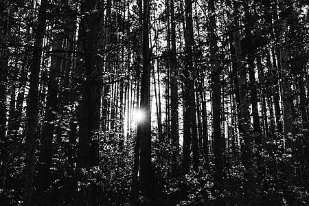 photo of black and white trees