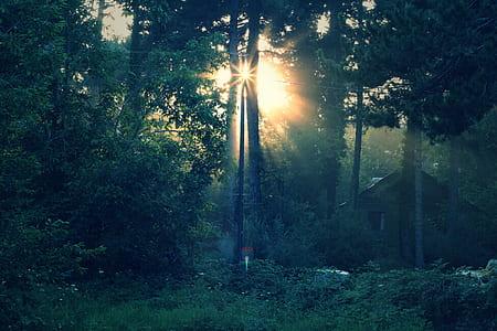 sun raise through trees