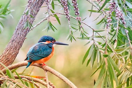 blue bird standing on tree brunch
