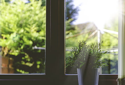 green leaf plant and white pot beside white wooden framed glass window at daytime