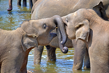 two gray elephants playing on body of water