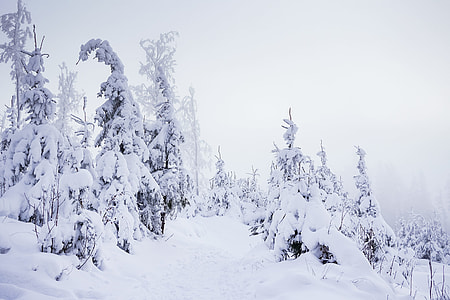 Mountain Forest Trail Under Heavy Snow