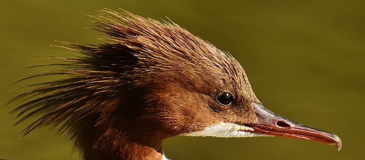 long-beak brown bird