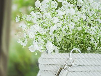 focused photo of white flower