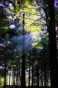 forest tress at daytime
