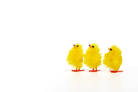 closeup photo of three ducklings