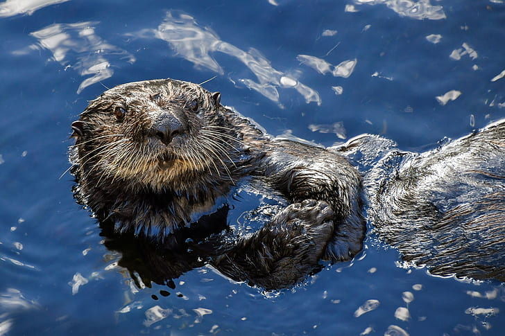 sea lion on the water