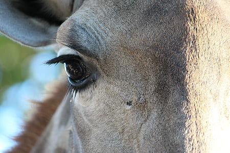 shallow focus of horse face