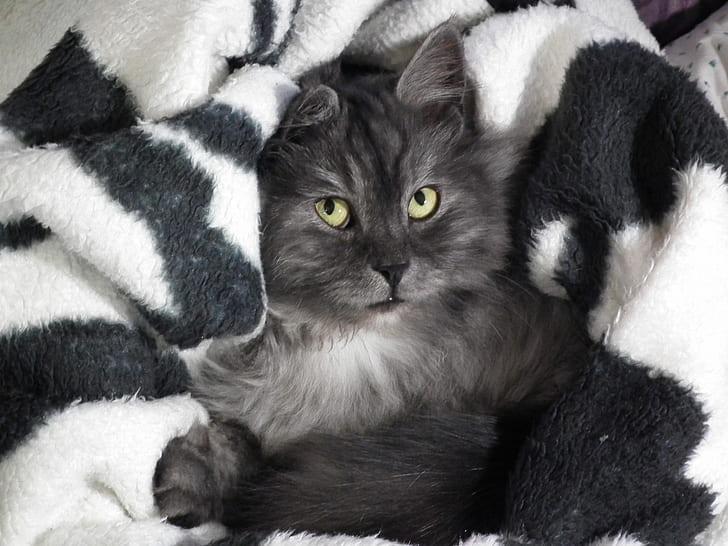 long-fur black cat on white comforter