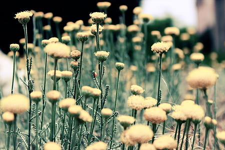 shallow focus photography of dandelions