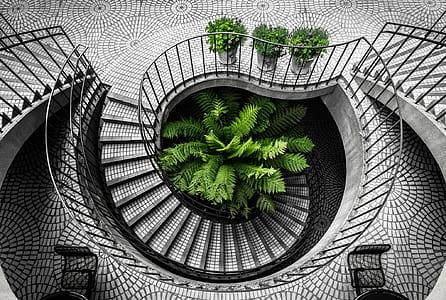 green leaf plant beside stair