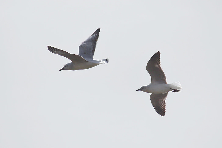 two grey birds flying on sky during daytime