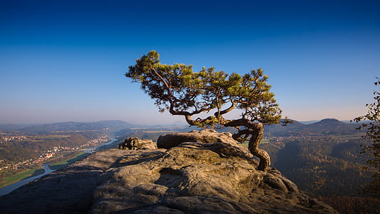 landscape photograph of green tree on the edge of mountain