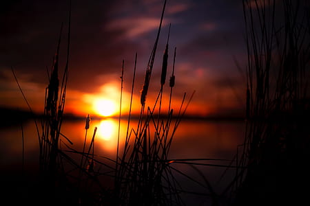 depth of field photography of grass during sunset
