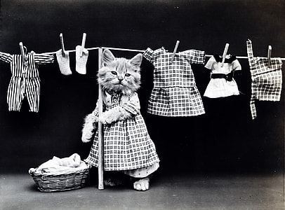 grayscale photo of a cat hanging clothes