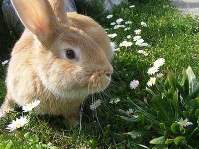 brown rabbit on green grass