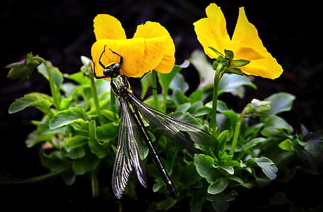 black dragonfly sipping the yellow petaled flower's nectar