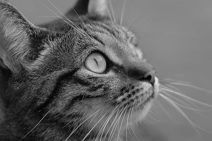Royalty Free Photo Grayscale Photo Of Cat Pickpik