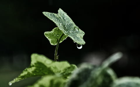 morning dew on green leaf