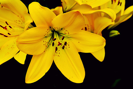 yellow petaled flower closeup photography