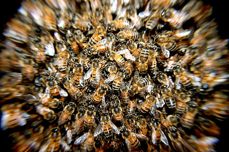swarm of honeybee closeup photography