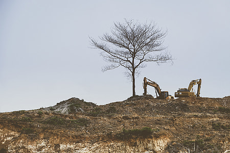brown tree on mountain