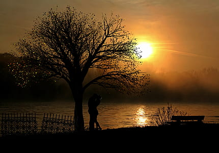 couple silhouette under a tree